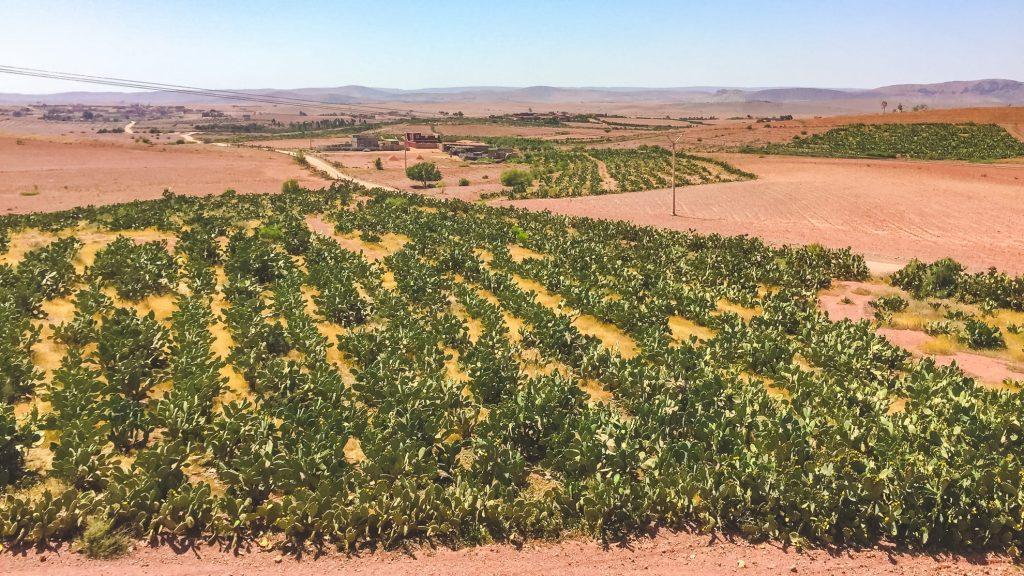 Maroko - Andyho Ceestopisy